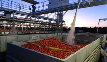 Complete Tomato Paste Line (Hot & Cold Break) full